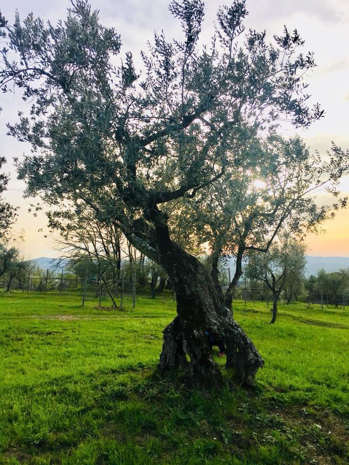 KaJa - Retreat Toskana